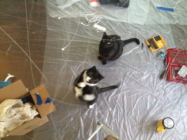 Kucing-kucing ini mengira saya membuat tanah kucing gelembung mereka sendiri