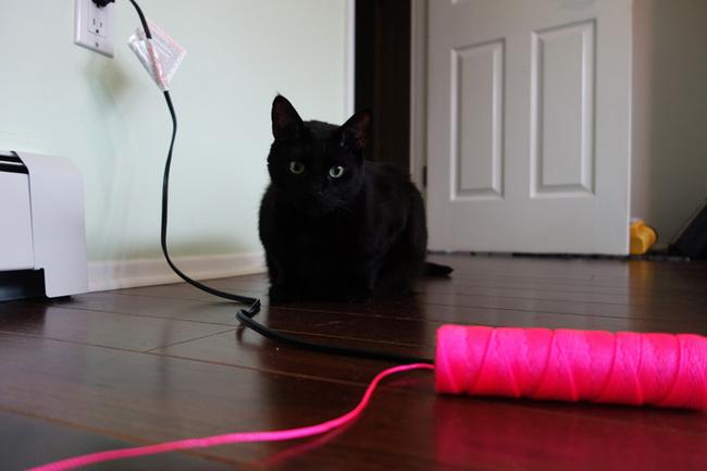 Anak kucing Boo mengalami sakit di bagian bokong selama proses ini.