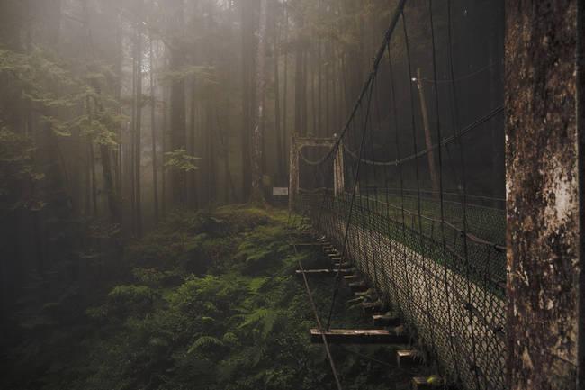 台湾阿里山森林桥
