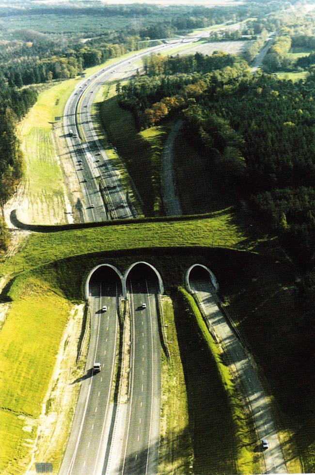荷兰动物过桥