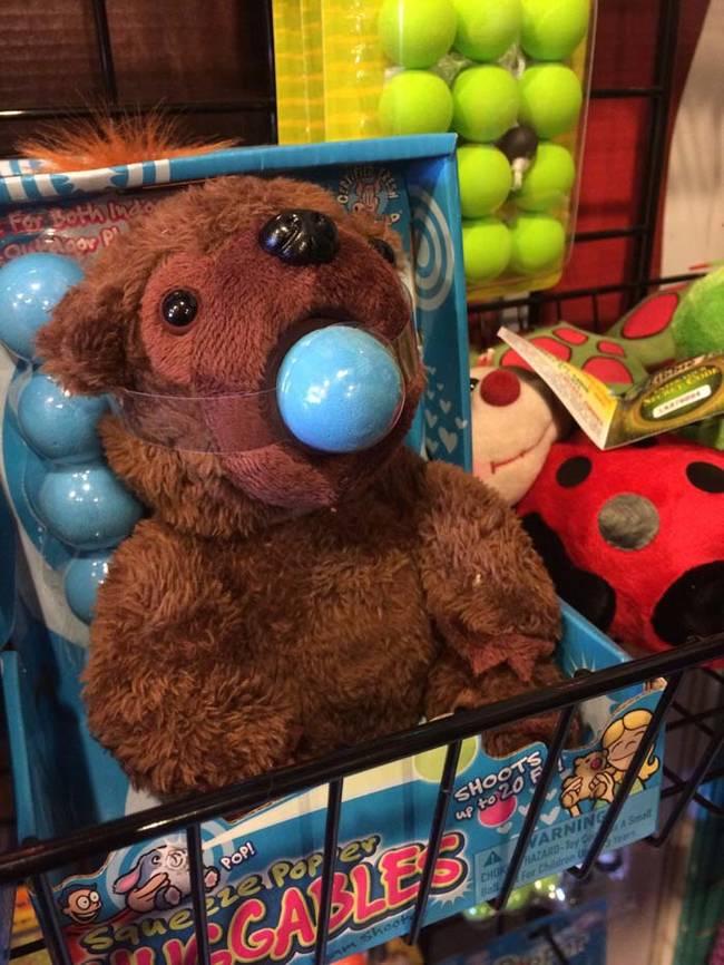 Beruang ini sepertinya memakai penyumbat bola.
