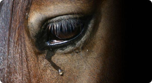 Washington makes horses cry