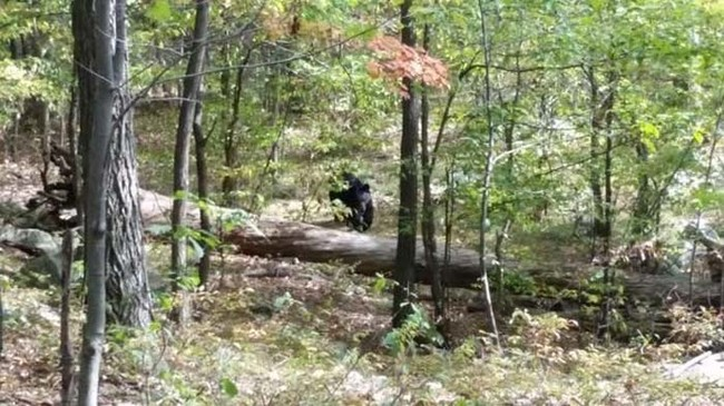 This picture of a bear was snapped by a hiker in New Jersey. Moments later, the hiker was attacked and killed by the same bear.