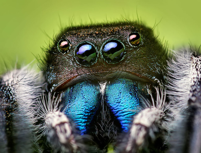 A Georgian woman kept hearing strange noises. After running some tests, she discovered that she had a jumping spider hanging out in her ear.