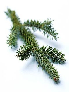 A Russian man had a 2-inch fir tree growing inside his lungs.