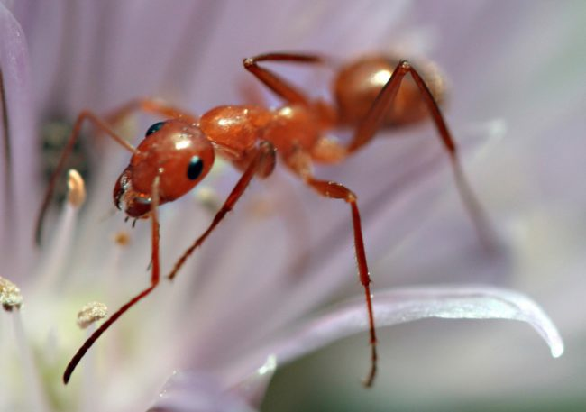 Ants outnumber humans 1.5 million to 1.
