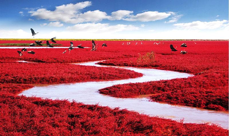 Red Beach - China