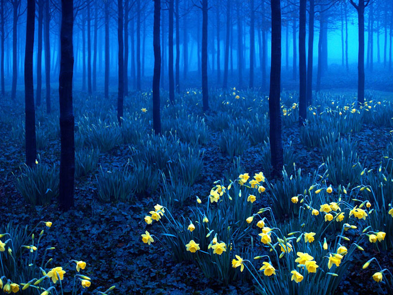 Black Forest - Germany