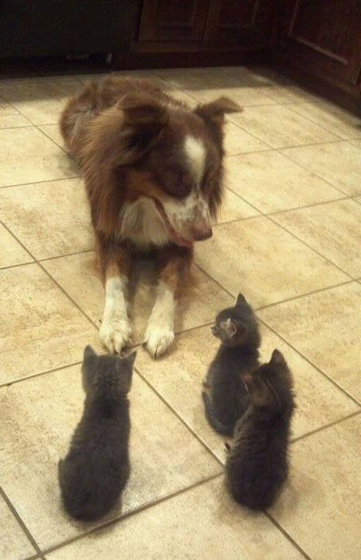 """I told you already, I'm not your mother. Please leave."""