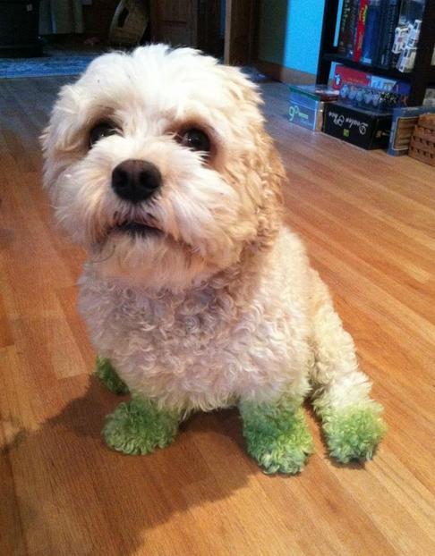 9. Saya tidak tahu bagaimana kaki menjadi hijau, tetapi selalu setelah ayah saya terluka.