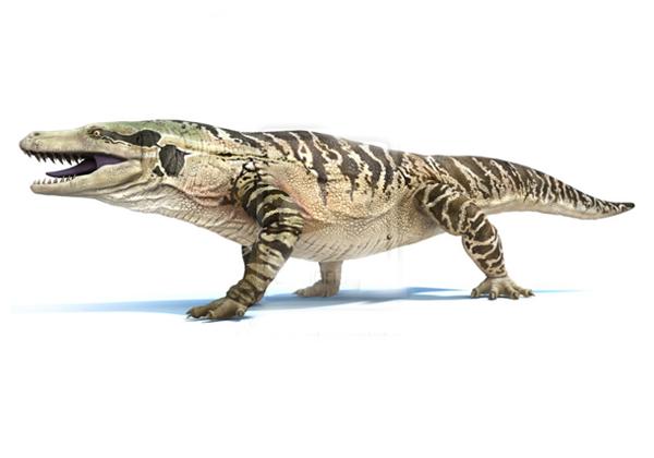 25.)Megalania:也被称为巨型裂土蜥蜴,它以哺乳动物,蛇,其他爬行动物和鸟类的饮食为食。 现代亲戚将是居住在印度尼西亚弗洛雷斯群岛的科莫多巨蜥。