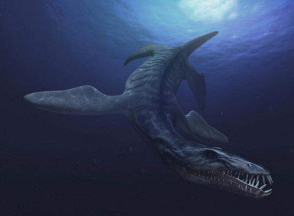 23.)Liopleurodon:这种海洋捕食者以鱼,鱿鱼和其他海洋爬行动物为食。 它比抹香鲸还大,头骨大约占其身体的1/4,里面充满了许多光滑的牙齿。