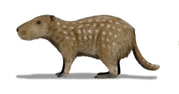22.)Josephoartigasia:这种水豚类动物是地球上最大的啮齿动物,重达1000kg。