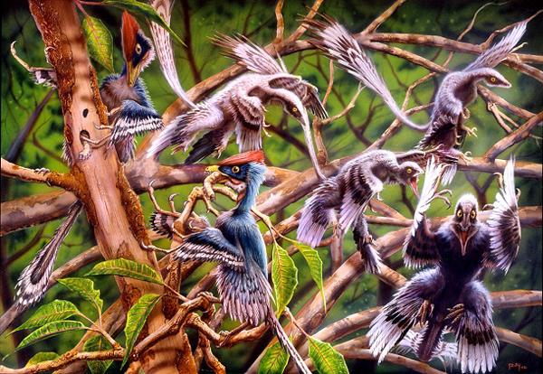 17.)表龙(Epidendrosaurus):这是第一个比恐龙更接近鸟类的爬行动物。 它长约6英寸,胳膊/翅膀上有爪子。