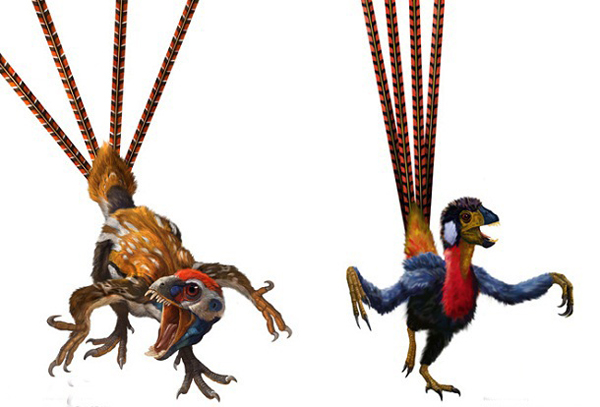 18.)Epidexipteryx:这些小的羽毛羽毛恐龙被发现在中国的内蒙古地区。 它们的大型羽毛是化石记录中最早已知的观赏羽毛代表。