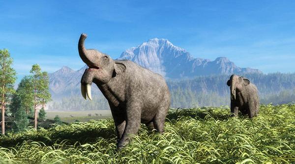 """13.)放热ium:"""" hoe牙""""类似于现代大象,在肯尼亚图尔卡纳湖的主要人类灭绝地点被发现。"""