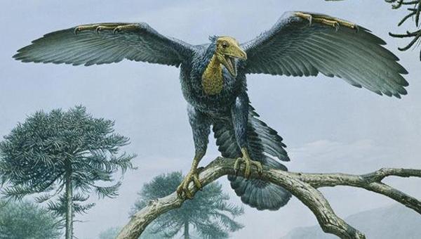 """11.)始祖鸟:""""第一只鸟""""据称存在于侏罗纪时期,于1861年在德国被发现。"""