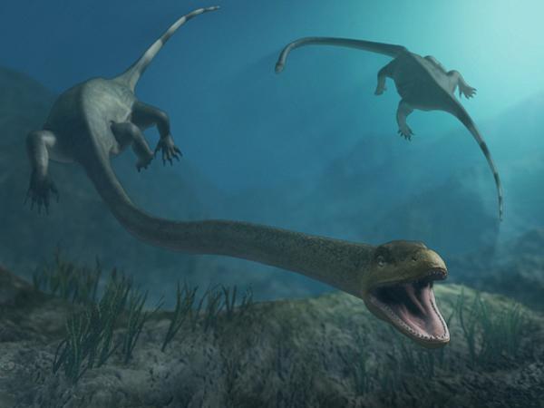 "9.)Tanystropheus:它的名字的意思是""长颈的"",史前爬行动物很容易超过20英尺长。"