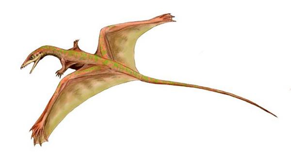 7.)Sharovipteryxe:在中亚发现的滑行爬行动物约一英尺长。 它会以昆虫为食,不能以动力飞行,只会滑行。