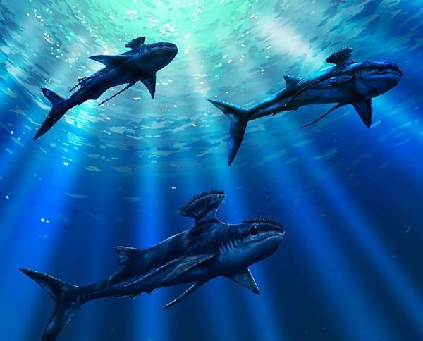 8.)Stethacanthus:一种灭绝的史前鲨鱼,它们长到6英尺长,而雄性的回头怪又长了。