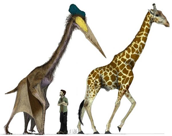 6.)Quetzalcoatlus:这是天空中最大的翼龙,因为它是一头常见的非洲长颈鹿。 它的翼展为30整英尺。