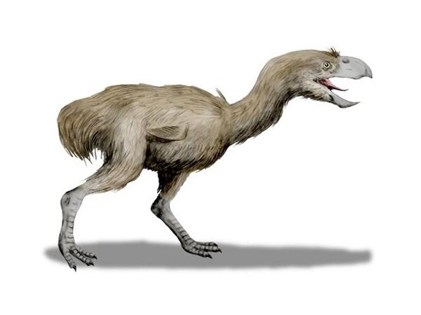 "4.)Phorusrhacidae:人们将这种生物称为""恐怖鸟""。 它是有史以来最大的掠食性鸟类之一,其时速可达40英里/小时。"