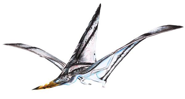 """2.)龙龙:翼龙的古老属是在美国中西部地区发现的。 这个名字的意思是""""裸体爬行动物""""。"""