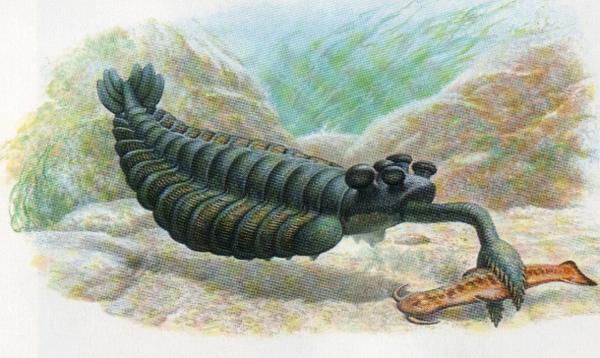3.)Opabinia:这是有史以来最奇怪的生物之一。 它有30个鳍状肢,30条腿,一个象鼻子一样的鼻子和一只龙虾爪。