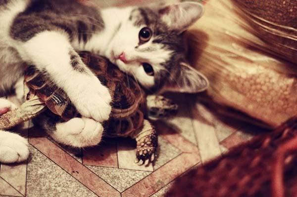 12.) Cute + Adorable = AWWW.