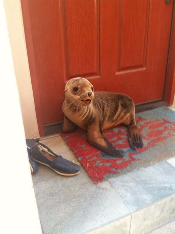 8.) He has my seal of approval.