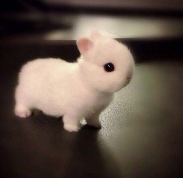 4.) I'll protect you from the world, Mr. Fluffy.