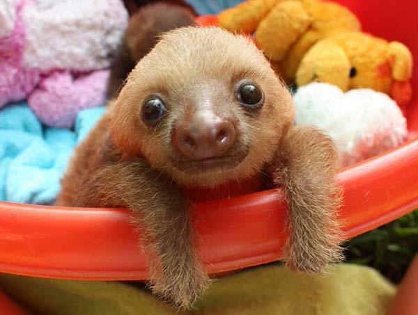 5.) Oh hai, Mister Sloth.