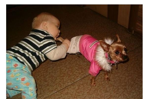 Mmmm, štene izgleda fino.